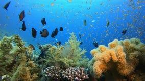 Подводный тропический цветной риф сток-видео