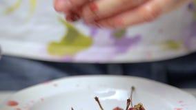 Подготавливающ вишню для варить чизкейк сток-видео