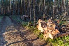 подготовленная древесина пожара в древесине Стоковое Изображение RF