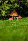 поддельная пластмасса гриба Стоковая Фотография