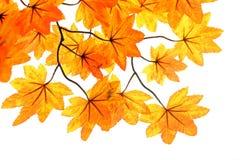 поддельные листья Стоковая Фотография RF