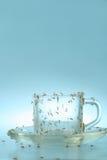 поддонник чашки муравеев Стоковые Фото