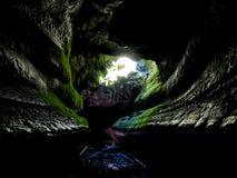 Подземелье обезьяны Стоковые Изображения