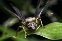Подземно-минные муравьи летая муравьи Стоковое Изображение RF