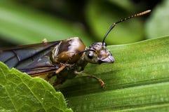 Подземно-минный летать муравьев стоковая фотография