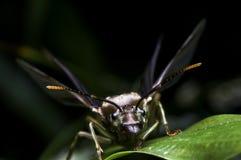 Подземно-минный летать муравьев Стоковое Изображение RF