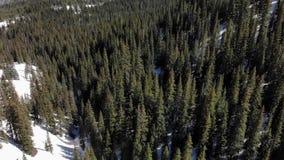 Подметая взгляд снежного соснового леса акции видеоматериалы