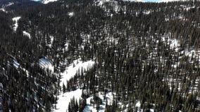 Подметая взгляд снежных леса и гор видеоматериал