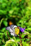 Поднимающее вверх бабочки близкое Стоковая Фотография