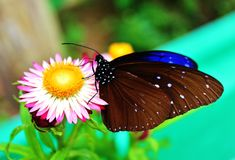 Поднимающее вверх бабочки близкое Стоковое Изображение