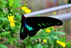 Поднимающее вверх бабочки близкое Стоковое Фото