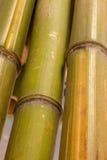 поднимающее вверх бамбука близкое Стоковое Фото