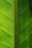 поднимающее вверх близких листьев тропическое Стоковое Фото