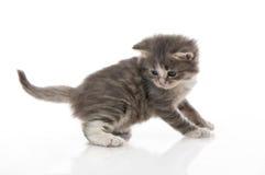 поднимающее вверх близкого милого котенка малое стоковые фото