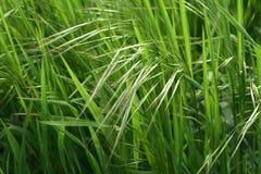 поднимающее вверх зеленого цвета травы clouse солнечное Стоковая Фотография RF