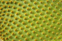 поднимающее вверх кактуса близкое стоковая фотография