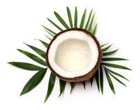 Поднимающее вверх кокоса близкое Стоковое Фото