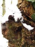 Поднимающее вверх коры дерева близкое Стоковое Изображение RF