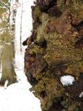 Поднимающее вверх коры дерева близкое Стоковые Изображения RF