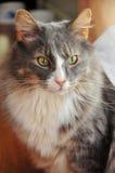 поднимающее вверх кота близкое милое Стоковое фото RF
