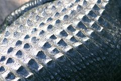 Поднимающее вверх крокодиловой кожи близкое стоковое изображение