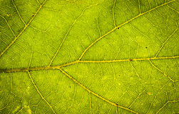 Поднимающее вверх листьев близкое Стоковые Фото
