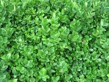 Поднимающее вверх растительности близкое Стоковая Фотография