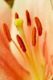 Поднимающее вверх цветка близкое Стоковая Фотография