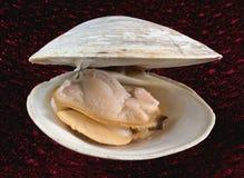 поднимающее вверх clam близкое Стоковая Фотография RF
