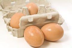 Поднос коричневых яичек Стоковая Фотография