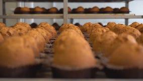 Поднос свежо испеченных булочек шоколада от теста печенья, продукции булочек Предпосылка пищевой промышленности, варя сток-видео
