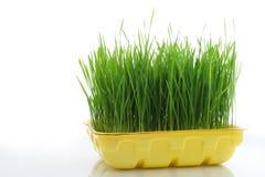 поднос травы стоковые изображения
