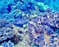 Подныривание морской жизни кораллового рифа Окинавы стоковая фотография rf