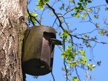 Подныривание птицы из коробки птицы стоковое фото rf