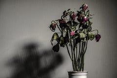Поднял высушенный в керамической вазе Левая сторона в комнате с тенями сфокусируйте мягко стоковые изображения rf