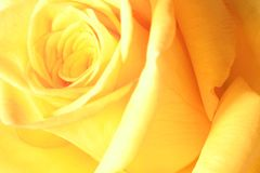 поднял желтый цвет Стоковые Изображения RF