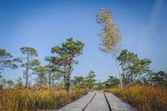 Поднятая трясина Променад в национальном парке Kemeri Низкий угол стоковые изображения