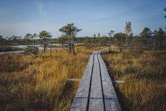Поднятая трясина Променад в национальном парке Kemeri стоковые изображения rf