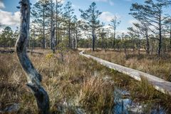 Поднятая трясина Променад в следе природы трясины Viru эстония стоковые фотографии rf