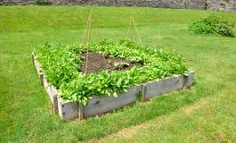 поднятый сад кроватей стоковое изображение rf
