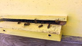 Подогнали пчела медленно летает к улью для того чтобы собрать нектар на частной пасеке от цветков в реальном маштабе времени сток-видео
