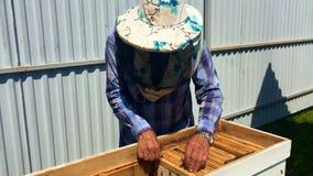 Подогнали пчела медленно летает к beekeeper для того чтобы собрать нектар на частной пасеке от цветков в реальном маштабе времени акции видеоматериалы