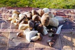 Подосиновик плюшки Пенни edulis на таблице Стоковое Изображение