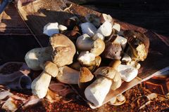 Подосиновик плюшки Пенни edulis на таблице Стоковые Фото