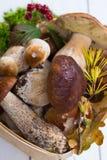 Подосиновик edulis, cepe, porcini величает неумытый на белое деревянном Стоковое фото RF