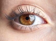 Подрезанное изображение глаза человека стоковое изображение rf
