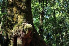 Подрезанное изображение тропической детали тропического леса следа природы лотка Kew Mae на парке natuonal Doi Inthanon, Chaingma Стоковые Изображения RF