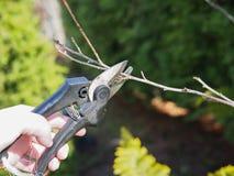 Подрезать весны treesn стоковая фотография rf