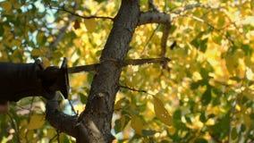 Подрезать деревьев с пилой видеоматериал