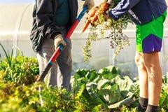 Подросток людей земледелия 2 молодой и пожилой человек в рабочей одежде стоковые изображения rf